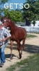 A vendre yearling